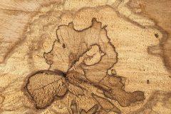 Przekrój drzewa/drewna